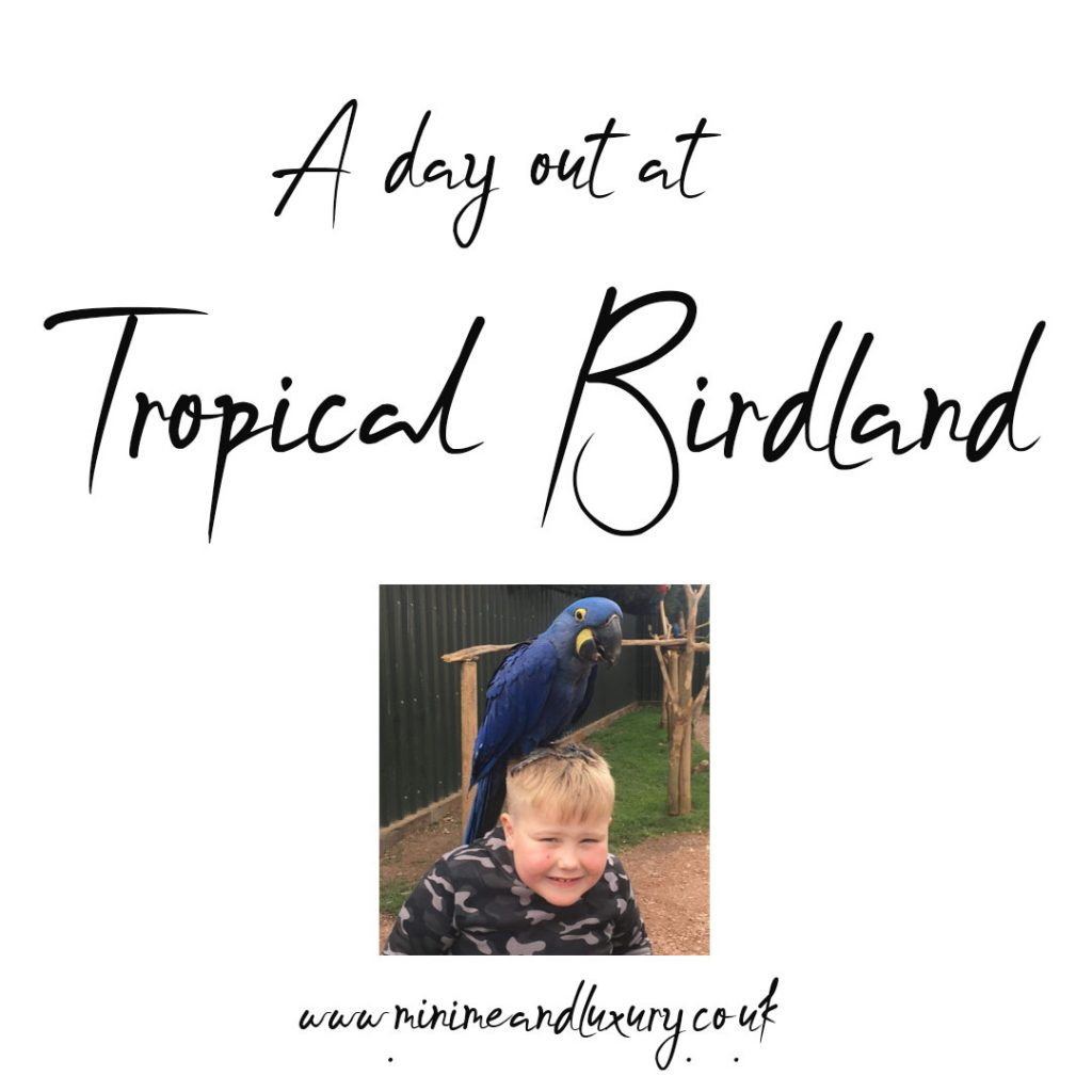 Tropical Birdland